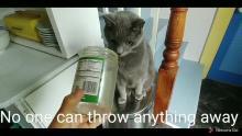 Garbage Man cat
