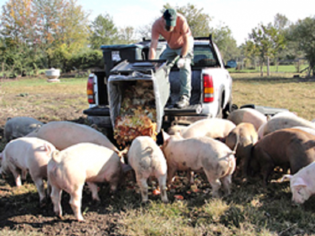 Photo - Michael Simpson - VT Pig Farm