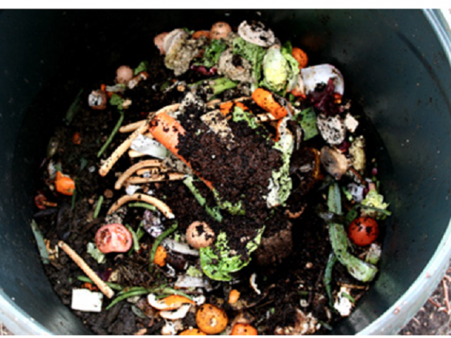 A bucket full of organic matter